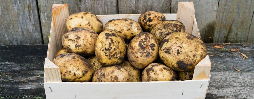 Gut bekannt Die richtige Lagerung der Kartoffeln | Kartoffelvielfalt GB23