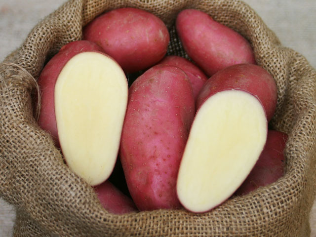 Franceline Kartoffelvielfaltde
