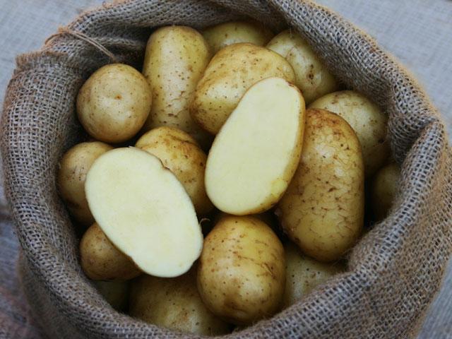 Etwas Neues genug Bio-Pflanzkartoffeln 'Granola' | Kartoffelvielfalt.de &RD_84