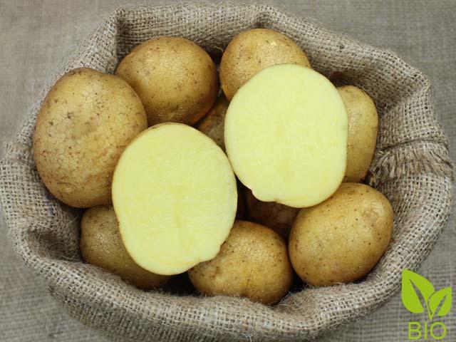 Ganz und zu Extrem Bio-Pflanzkartoffeln 'Granola' | Kartoffelvielfalt.de @PL_41